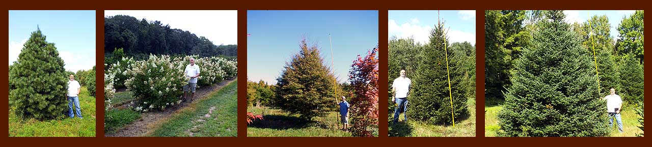 Collage of various evergreen trees, shrubs, and deciduous plants